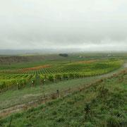 Weinbau bei Blenheim