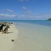 Zwei Hunde am Strand einer Insel