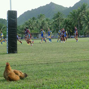 Auch ein Huhn, mit 4 Küken, sitzt am Spielfeldrand