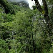 Der Weg beginnt im Regenwald