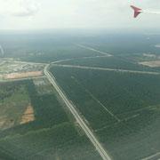Plantagen, aus dem Flugzeug gut zu erkennen
