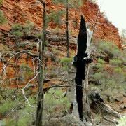Vom Buschfeuer ausgehoehlter Baumstamm