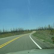 Kilometerweit die Reste des letzten Waldbrandes (2006)