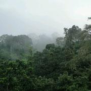 Nebel steigt ausdem Wald