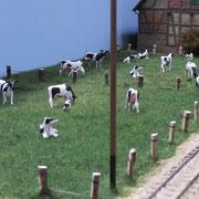 Glücklich Kühe