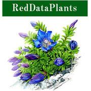 日本の絶滅危惧種・植物図鑑