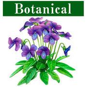 ボタニカルアート・植物画