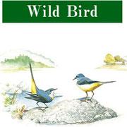 日本の野鳥 バードウオッチング
