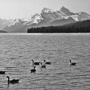 Bild 3 - Canada
