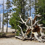Bild 7 - Yellowstone