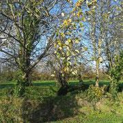 Dimanche 15 novembre 2020. Un petit chemin, une lumière entre 2 averses, quelques feuilles qui résistent encore aux coups de vent, des photos banales d'un dimanche après-midi d'auto.