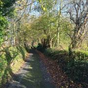 St Loup-Hors. Dimanche 15 novembre 2020. Un petit chemin, une lumière entre 2 averses, quelques feuilles qui résistent encore aux coups de vent, des photos banales d'un dimanche après-midi d'auto.