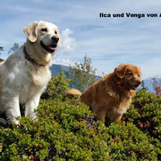 ILCA und VENGA - André Mayenzet