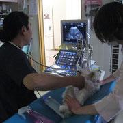 腹部エコー検査コース