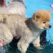 テディ わんわんプールで泳いだよ♪