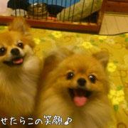 no38 チャイ & no39 エルマ