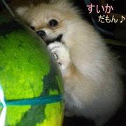 no23 花音
