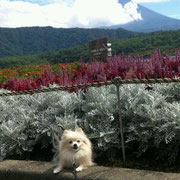 LULU  富士五湖に行ったよ♪
