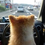 no4  みかん ドライブ!