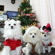 LULU with COCO&クロエ X'mas