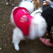 キョウスケくんは犬見知りなのでほとんど抱っこ^^