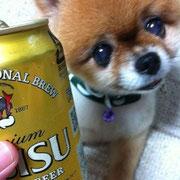 no5  ちょび  夏はビールでしゅ♪