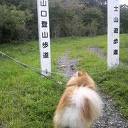 タラ  富士登山に挑戦!?