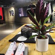 Location et entretien de plantes pour ce magasin Parisien