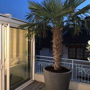Aménagement végétal d'une terrasse