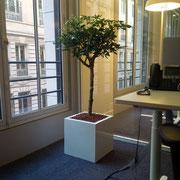 Paysagiste d'intérieur à Paris: location de plantes pour bureaux
