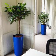 Paysagiste d'intérieur à Paris: location de plantes vertes pour bureaux