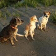 Kimba, Ginger und Farina an der Knock