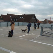 Hundetraining Parkhaus