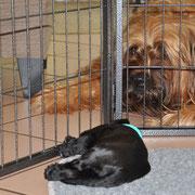 hinter Gittern_Aufsicht Carlotta