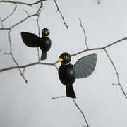 Amsel oder Schwarzdrossel (Turdus merula)