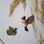 Braunbrustnonne oder Braunbrustschilffink (Lonchura castaneothorax)