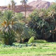 Die Palmenoase bei Tinghir