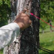 traces des griffes sur l'arbre