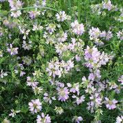 Natur pur! Blumenwiese - © Blockhaus Profi