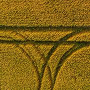Die Kornfelder oder Das W für... :-)