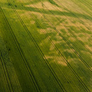 Die Kornfelder Nr. 2