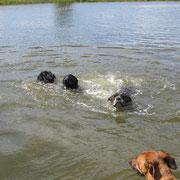 Kalle, Stanley u. Pepper beim Schwimmen