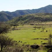 Baja California - im Norden noch ziemlich grün