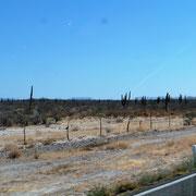 links und rechts Wüste, braune Büsche und Kaktus