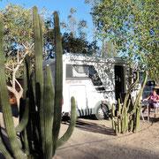 Camping zwischen den Kaktus