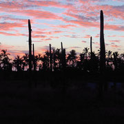 Sonnenuntergang hinter Palmen und Kaktus