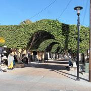 Hauptstrasse im Zentrum von Loreto