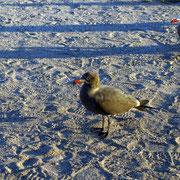 verschiedenste Wasservögel