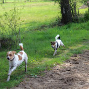 die Steller Heide bietet auch tolle Rennpisten