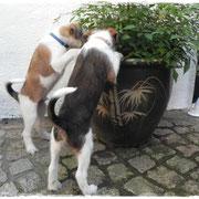 Josie und Josch- garnicht Neugierig...